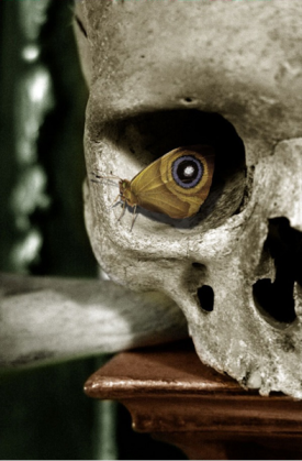 butterfly skull optical illusion