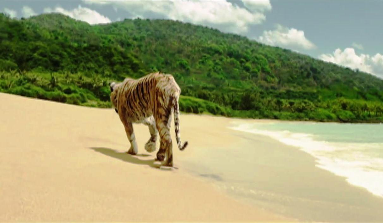 Pi Pi Island Thailand Tours