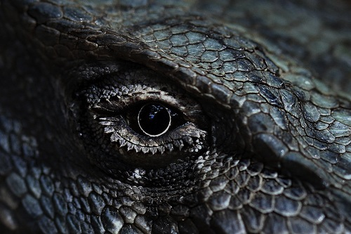 dragon eye of indigo blue (by paloetic)